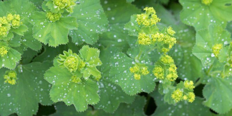 Herbal Remedies for Mercury Retrograde in Scorpio